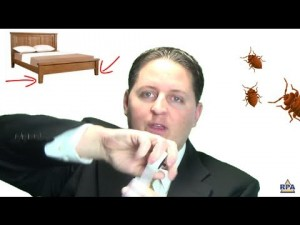 Can My Landlord Evict Me For Bed Bugs