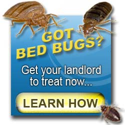 Landlord bed bugs